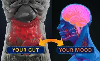 gut and mood microbiome